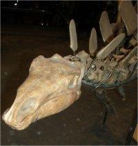 kopf dinosaurier bilder