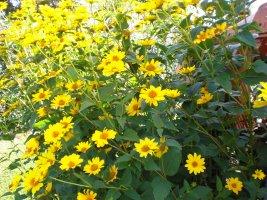 Die Farbe Gelb Kidswebde
