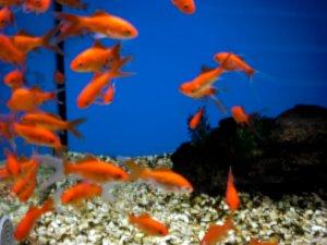 """Das Projekt """"Aquarium"""" für Kinder im kidsweb.de"""