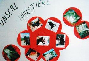Kita Tier Proekt Fur Kinder Im Kidsweb De