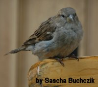 welche vögel bleiben im winter hier